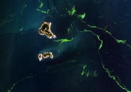 衛星直擊青島滸苔,到底有多嚴重