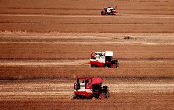 2021国际粮食减损大会揭幕