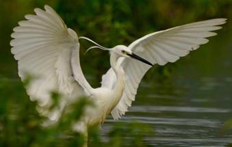 广西玉林:白鹭成群生态佳