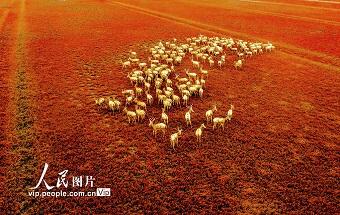 江苏东台:湿地秋景美如画